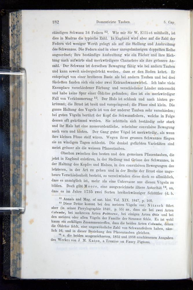 Image of Darwin-F914.1-1868-00182