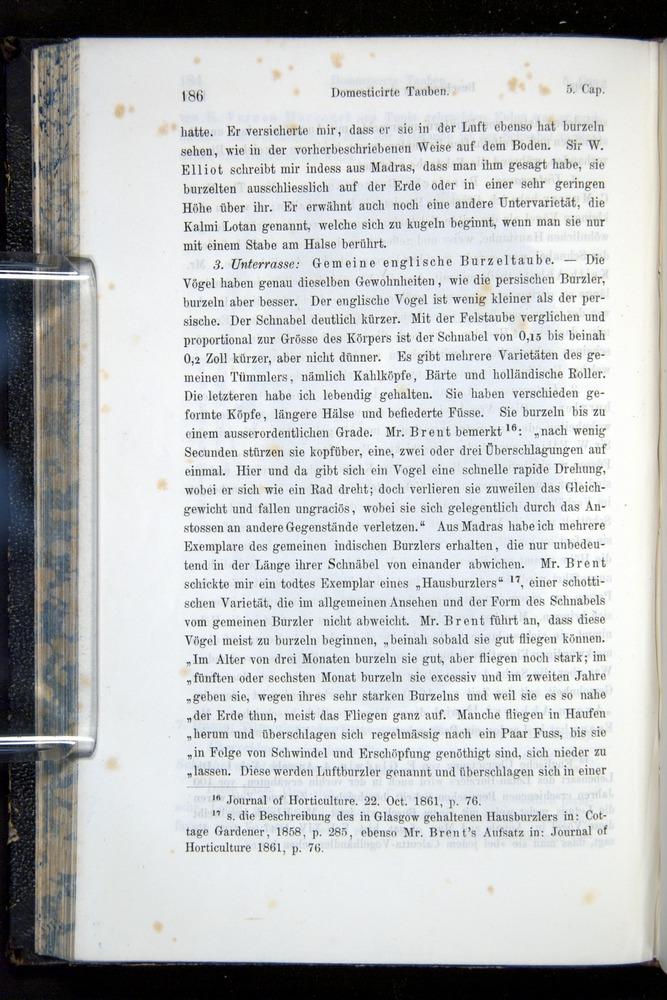 Image of Darwin-F914.1-1868-00186