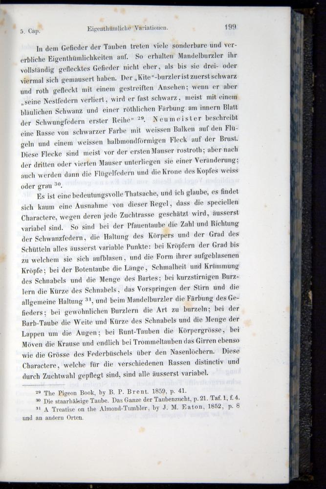 Image of Darwin-F914.1-1868-00199