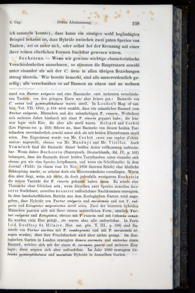 Image of Darwin-F914.1-1868-00239