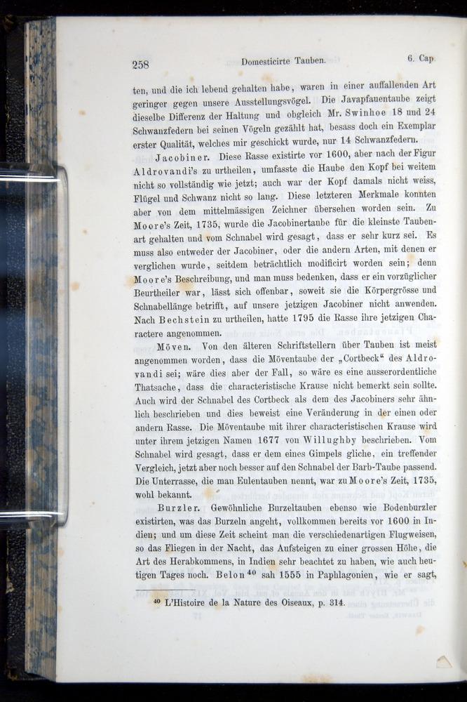 Image of Darwin-F914.1-1868-00258