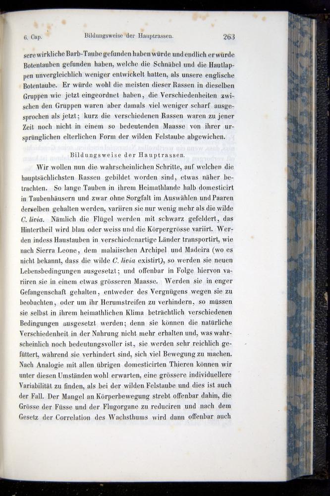 Image of Darwin-F914.1-1868-00263