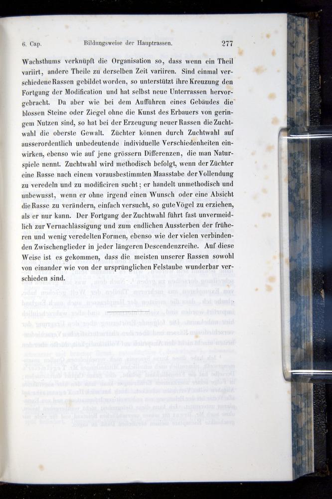 Image of Darwin-F914.1-1868-00277