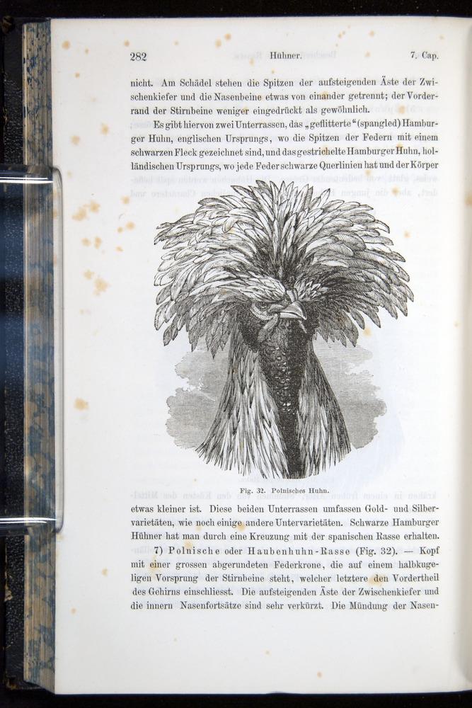 Image of Darwin-F914.1-1868-00282
