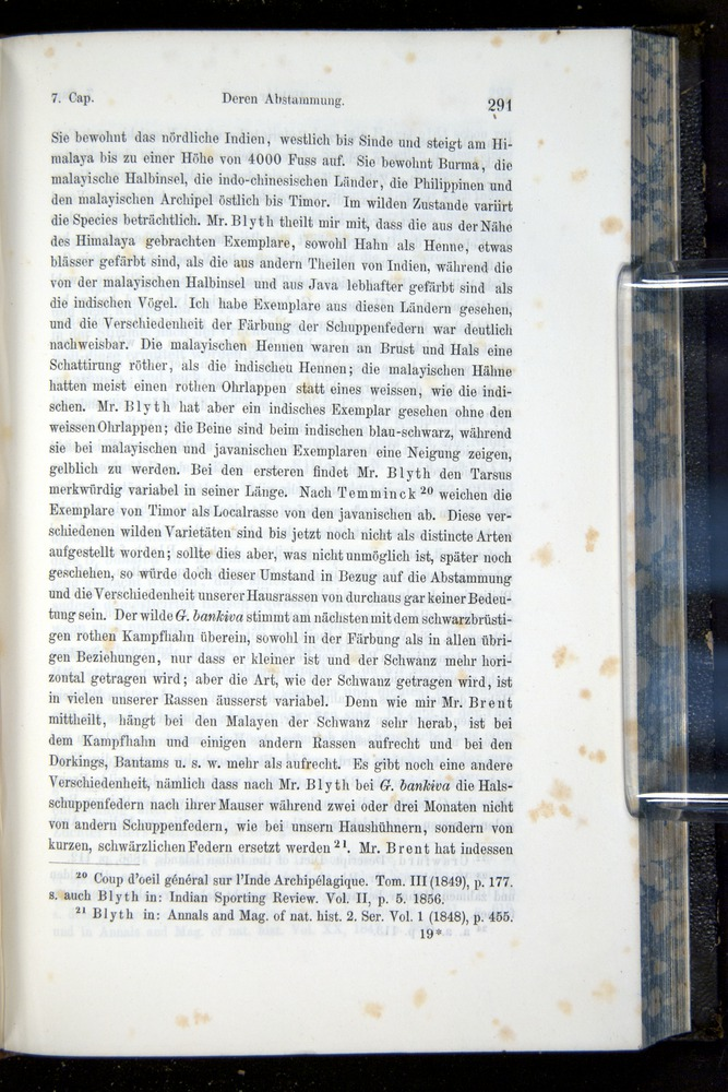 Image of Darwin-F914.1-1868-00291