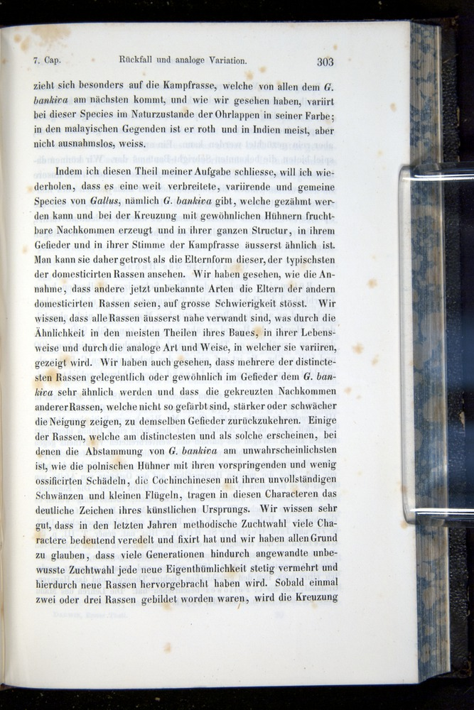 Image of Darwin-F914.1-1868-00303