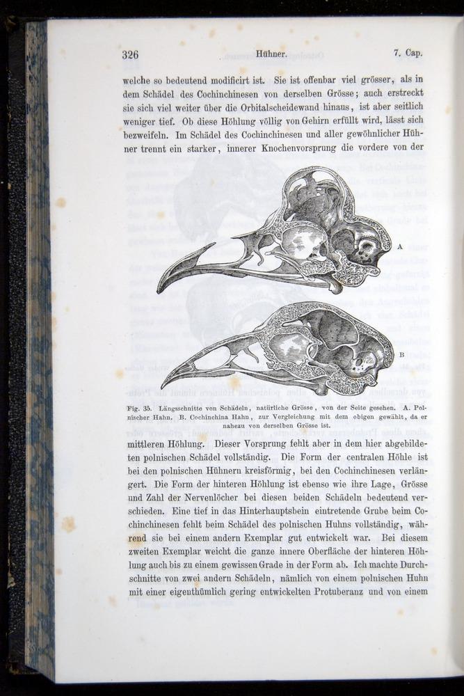 Image of Darwin-F914.1-1868-00326