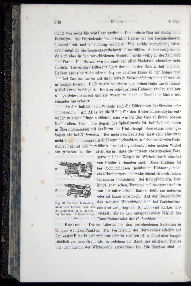 Image of Darwin-F914.1-1868-00332