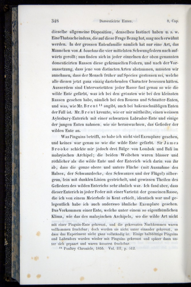 Image of Darwin-F914.1-1868-00348