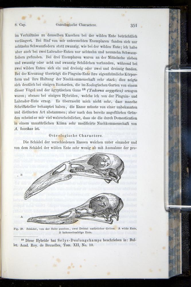 Image of Darwin-F914.1-1868-00351
