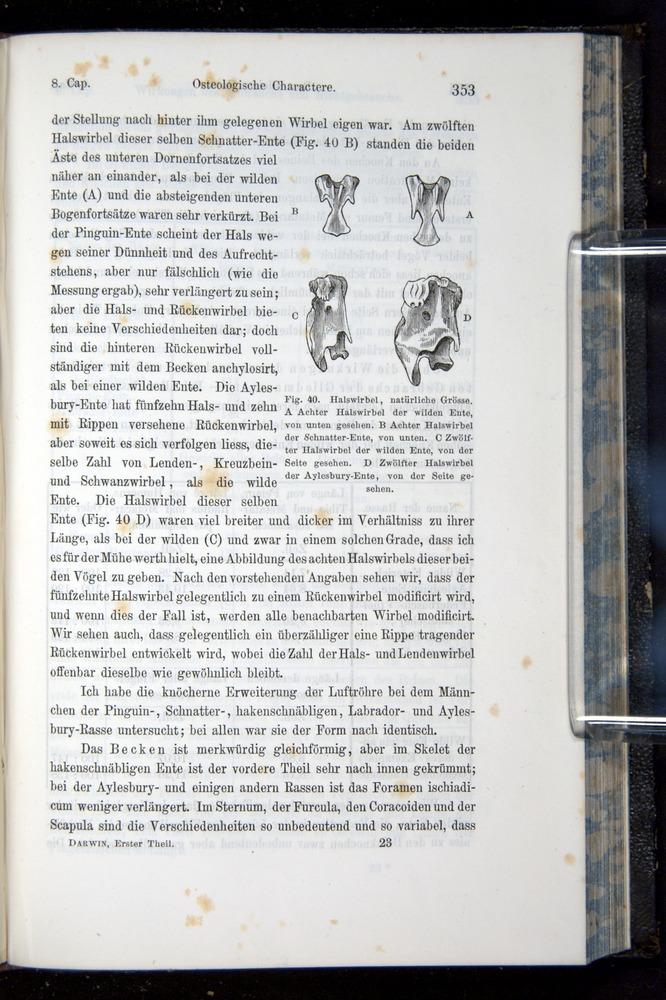 Image of Darwin-F914.1-1868-00353