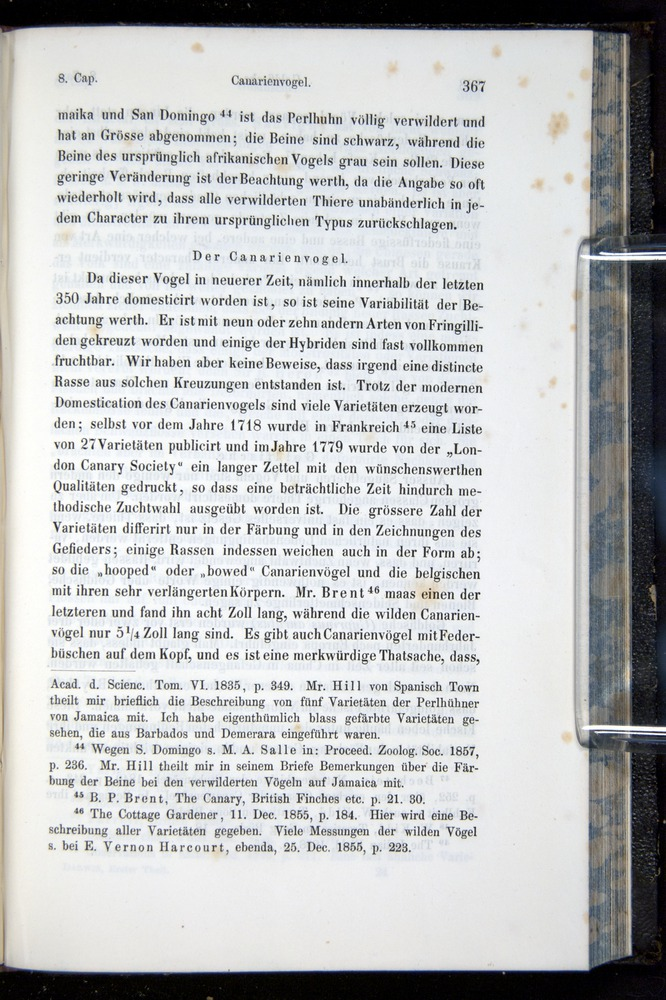 Image of Darwin-F914.1-1868-00367