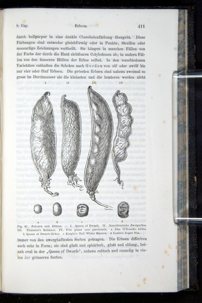 Image of Darwin-F914.1-1868-00411