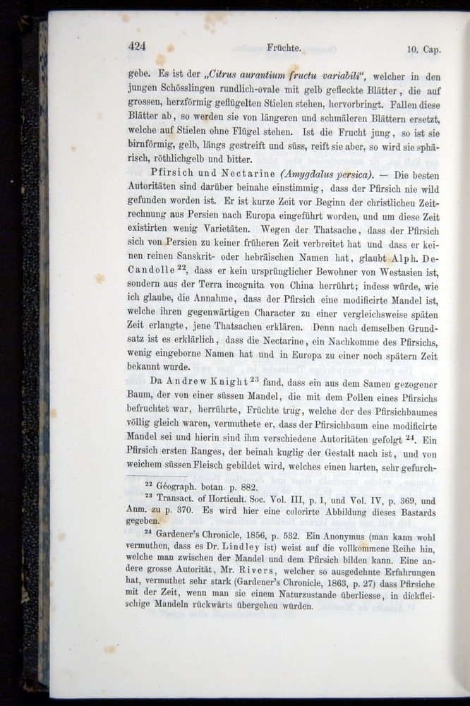 Image of Darwin-F914.1-1868-00424