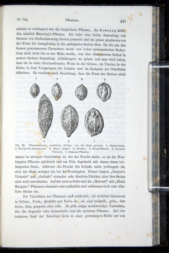Image of Darwin-F914.1-1868-00437