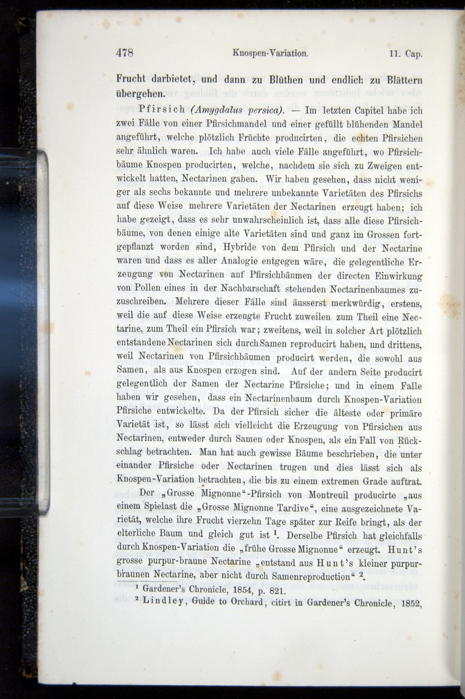 Image of Darwin-F914.1-1868-00478
