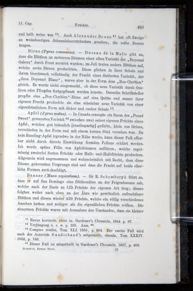 Image of Darwin-F914.1-1868-00481