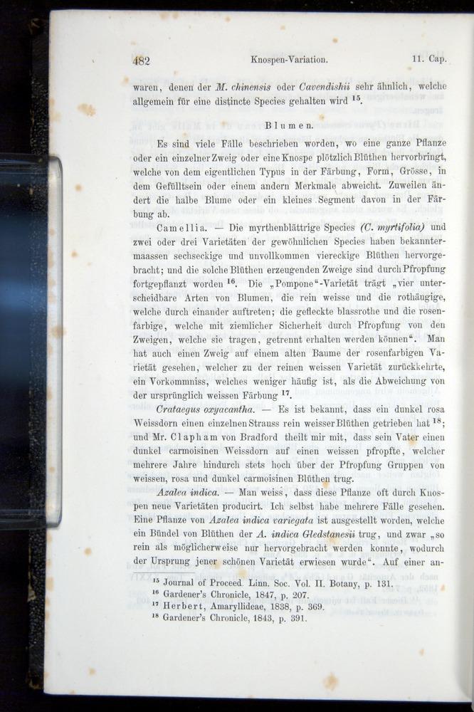 Image of Darwin-F914.1-1868-00482