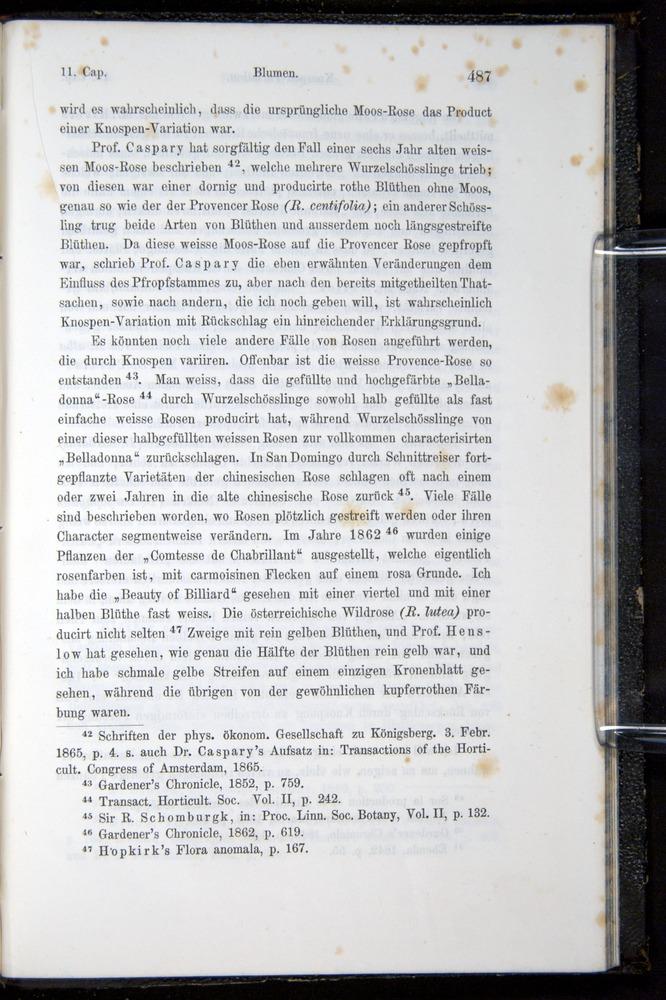 Image of Darwin-F914.1-1868-00487