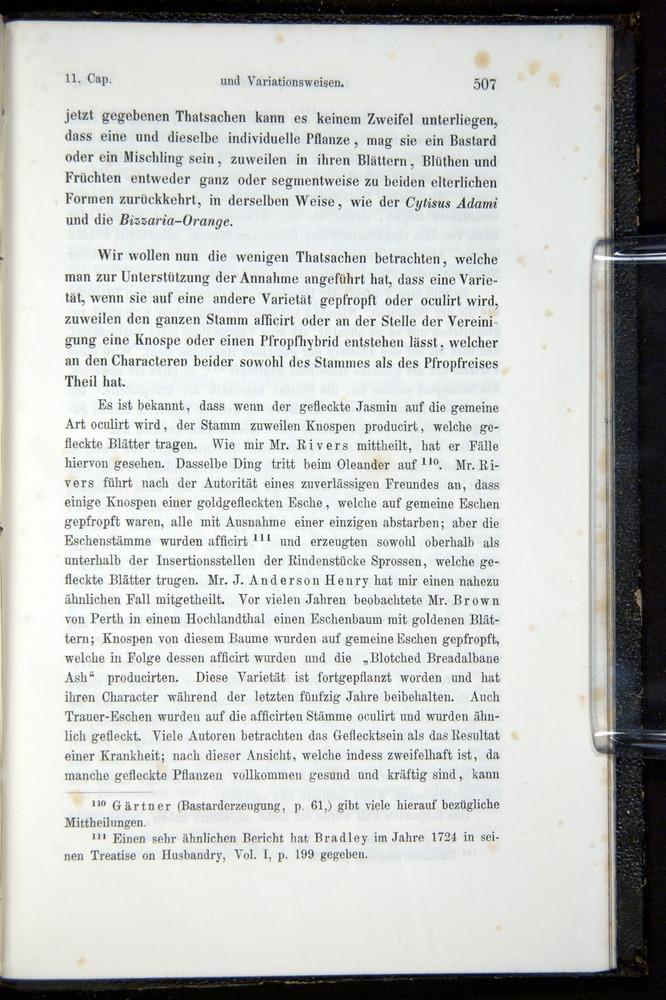 Image of Darwin-F914.1-1868-00507