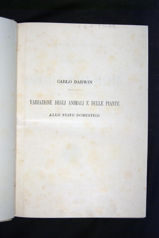 Image of Darwin-F920-1876-000-tp1