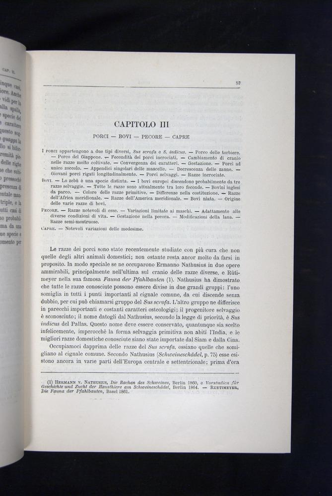 Image of Darwin-F920-1876-057