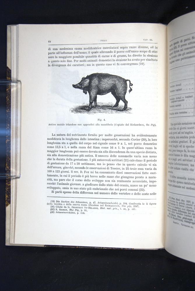 Image of Darwin-F920-1876-064