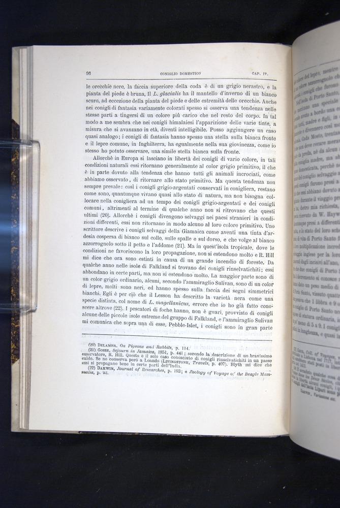Image of Darwin-F920-1876-096