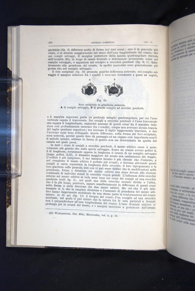 Image of Darwin-F920-1876-102