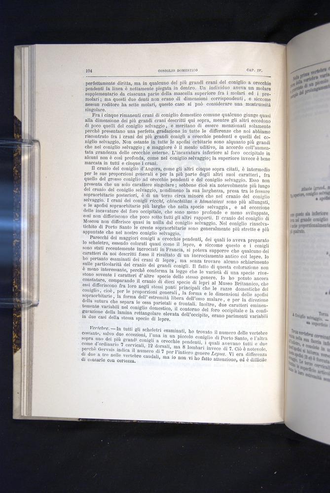 Image of Darwin-F920-1876-104