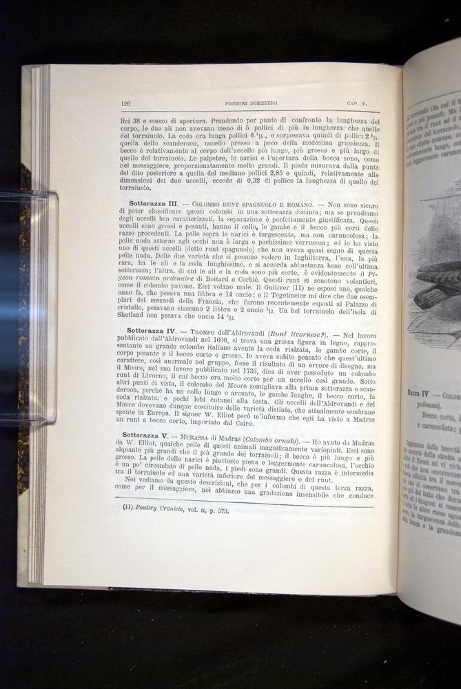 Image of Darwin-F920-1876-126