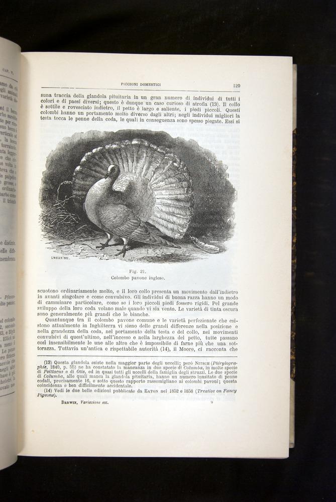 Image of Darwin-F920-1876-129