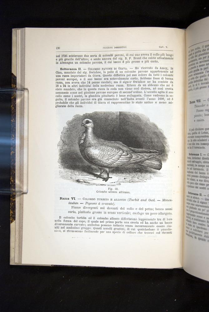 Image of Darwin-F920-1876-130