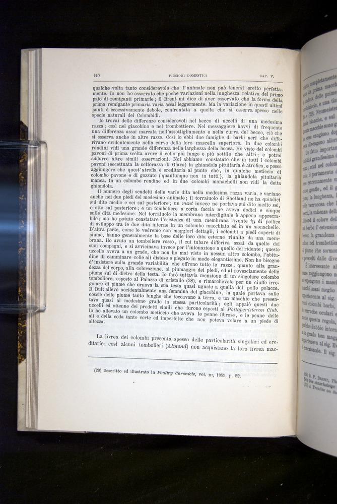 Image of Darwin-F920-1876-140