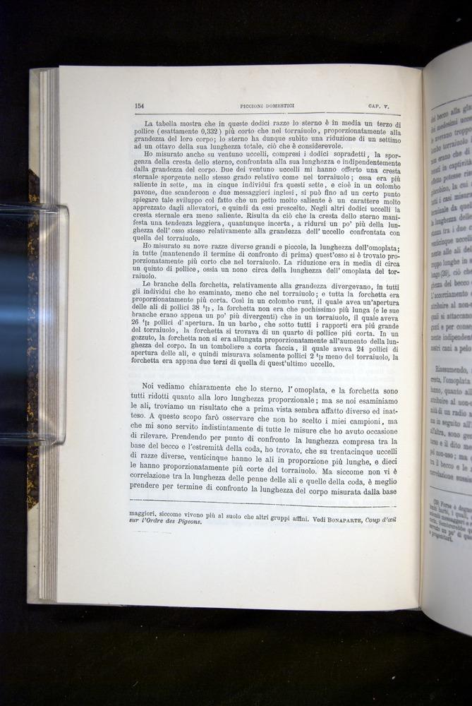 Image of Darwin-F920-1876-154