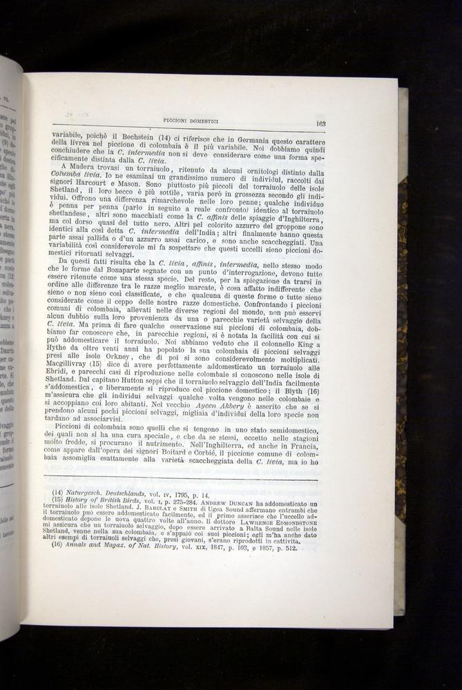 Image of Darwin-F920-1876-163