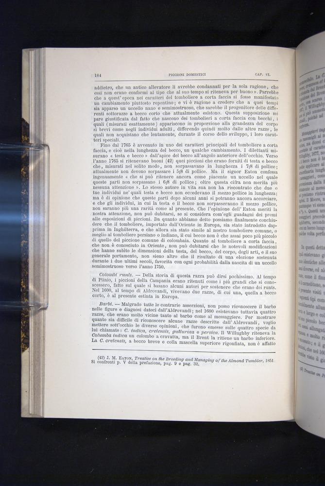 Image of Darwin-F920-1876-184