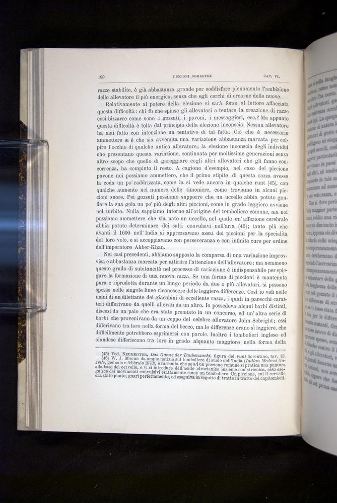Image of Darwin-F920-1876-190