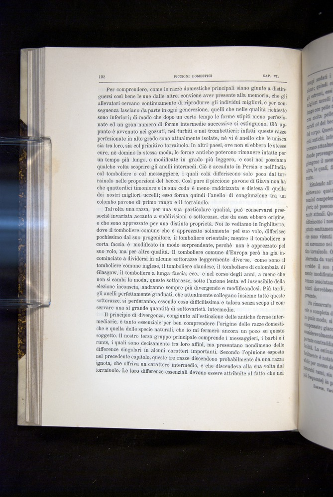 Image of Darwin-F920-1876-192