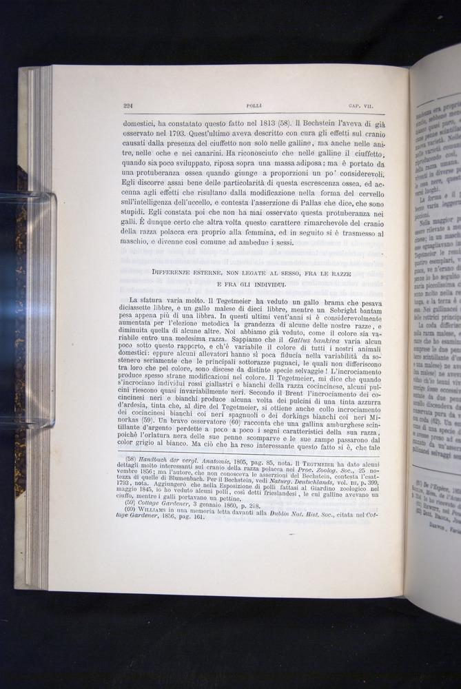 Image of Darwin-F920-1876-224
