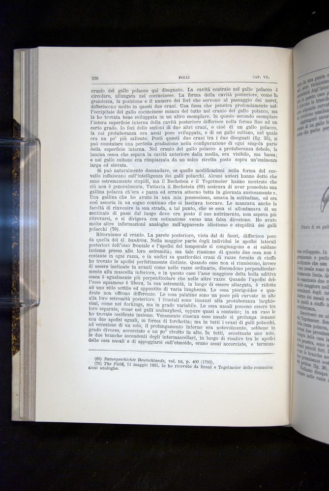 Image of Darwin-F920-1876-230