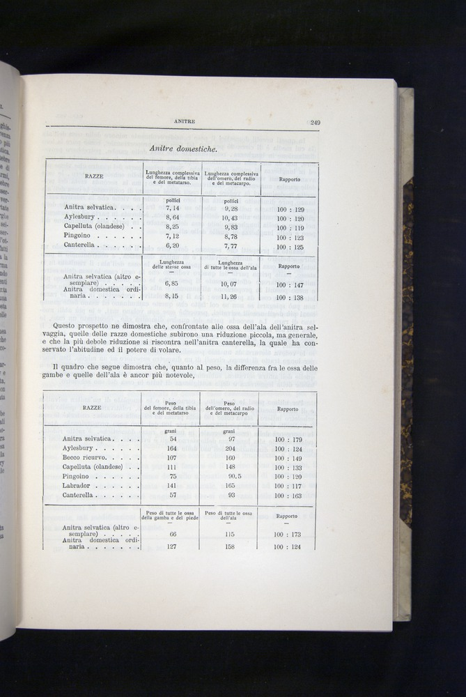 Image of Darwin-F920-1876-249