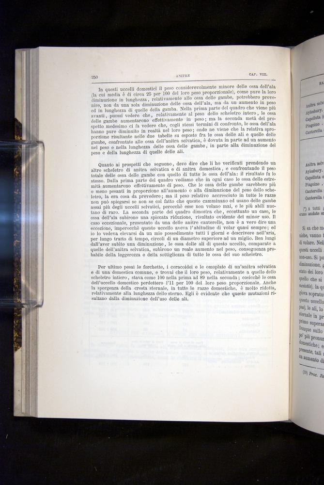 Image of Darwin-F920-1876-250