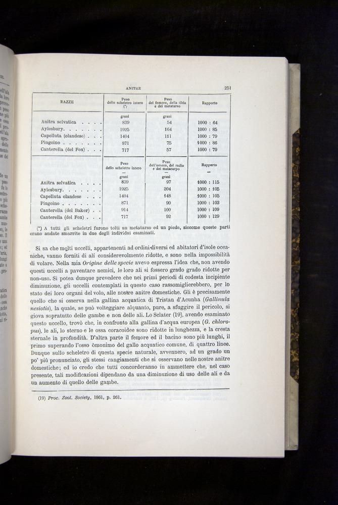 Image of Darwin-F920-1876-251