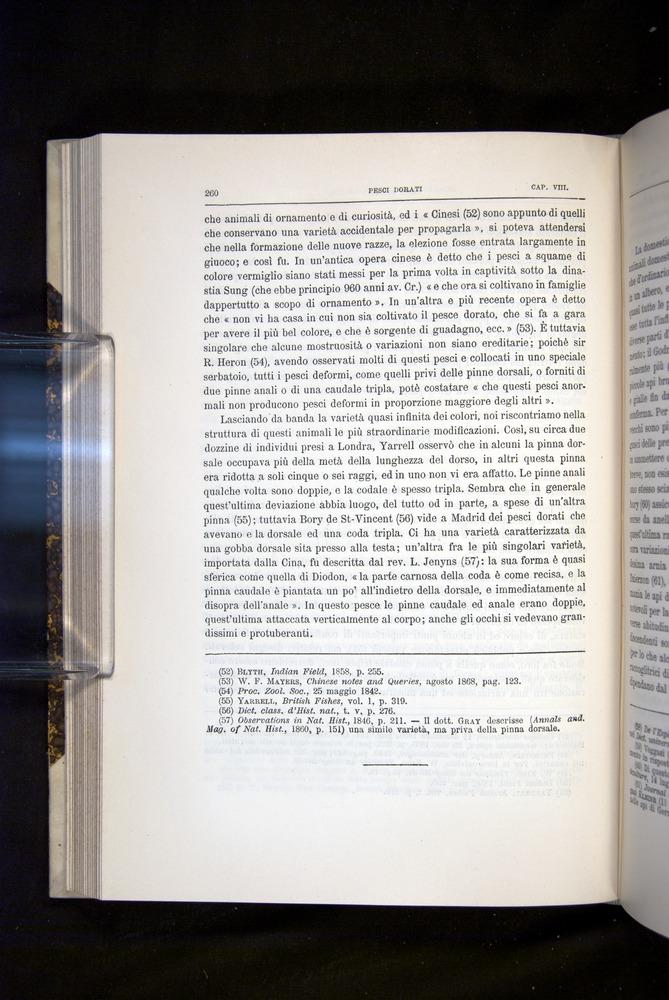 Image of Darwin-F920-1876-260