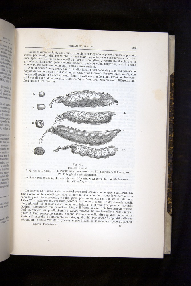 Image of Darwin-F920-1876-289