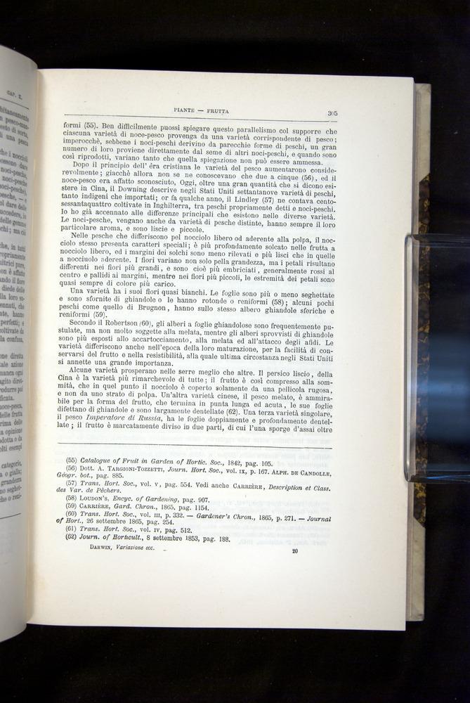 Image of Darwin-F920-1876-305