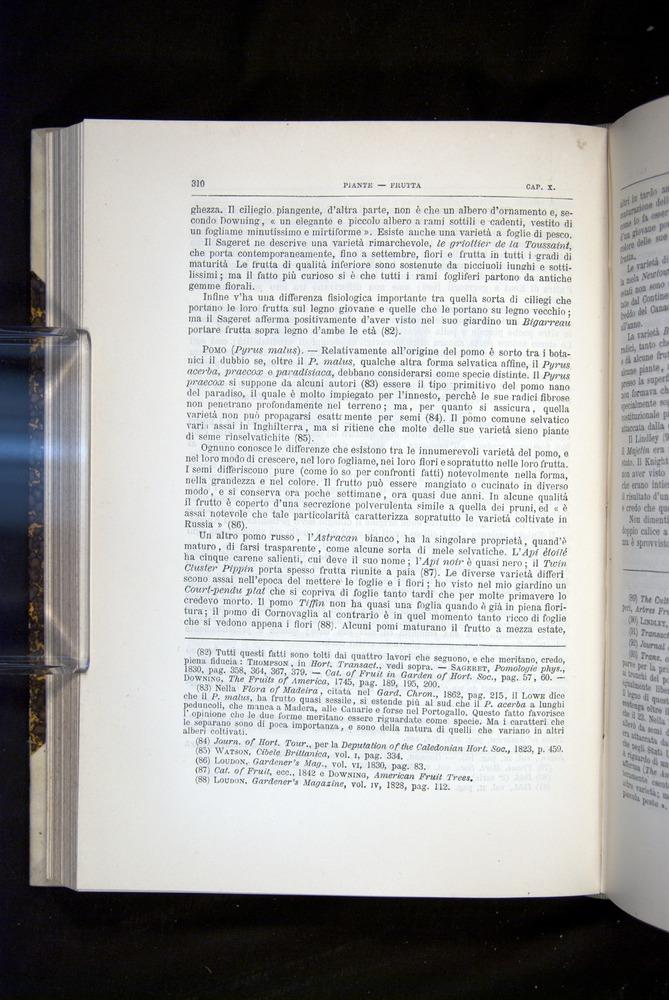 Image of Darwin-F920-1876-310