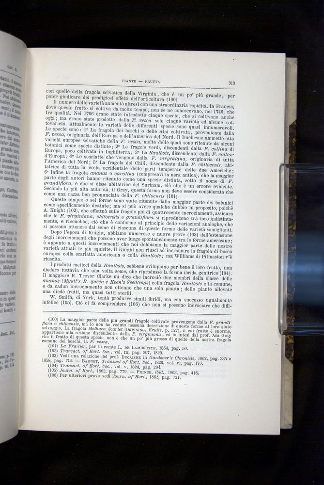 Image of Darwin-F920-1876-313