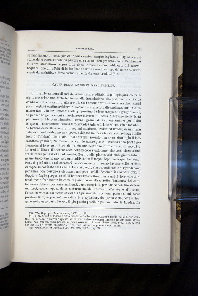 Image of Darwin-F920-1876-395